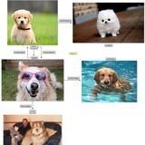 The guide to doggo