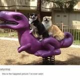 happy doggos